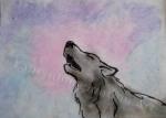 Wolf Howl, chalk pastel still, Flash Animatic by Lauryn Medeiros
