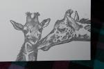 drawing by Lauryn Medeiros, giraffes, Angela R. Stewart, letterpress, card