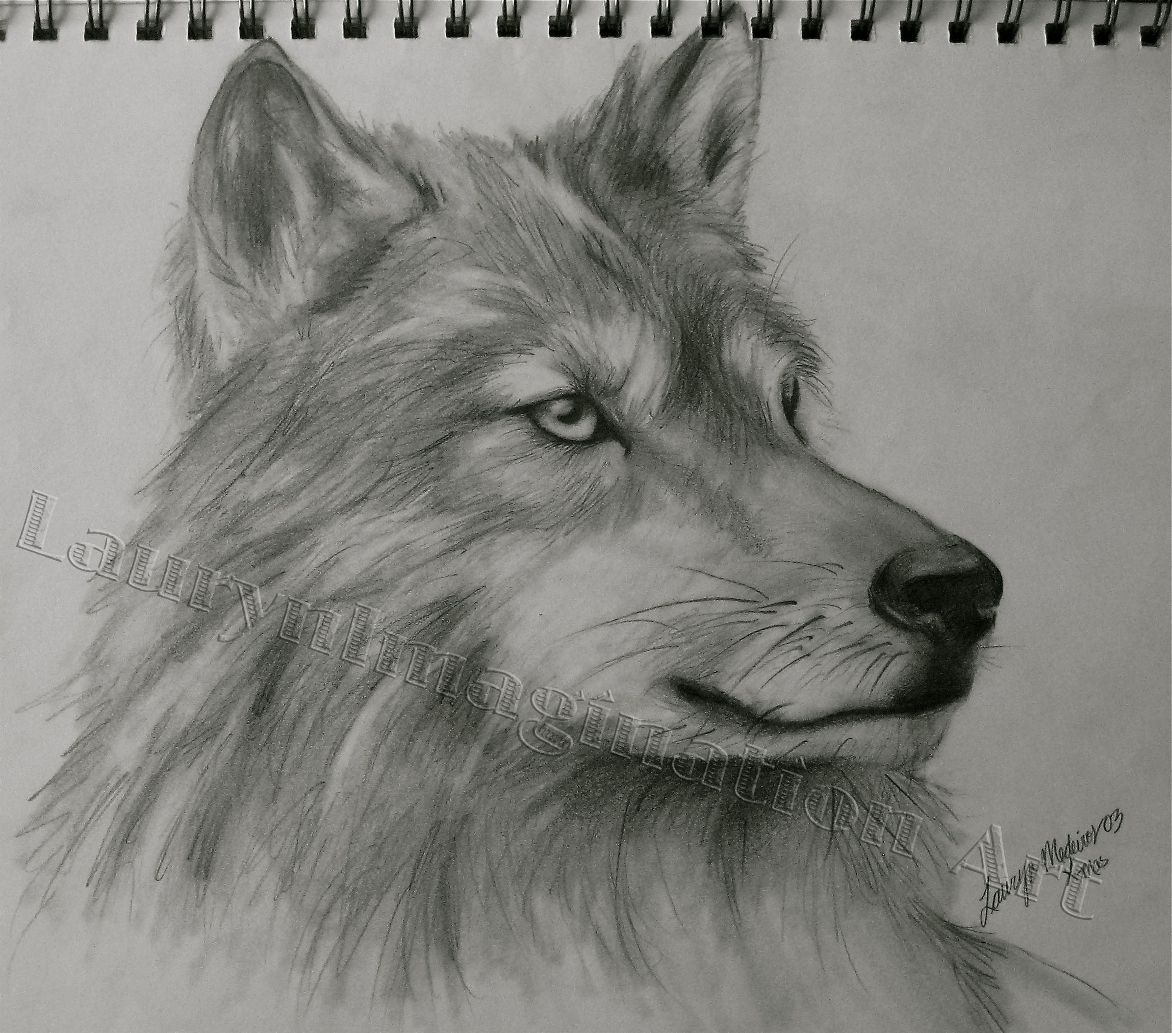 Drawings Of Wolves: Laurynimagination