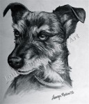 Penny, Lindsey's Dog, graphite drawing by Lauryn Medeiros