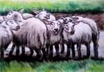 Sheep in the Scottish Highlands, chalk pastel by Lauryn Medeiros