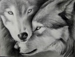 Two Wolves, graphite drawing by Lauryn Medeiros