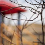photography by Lauryn Medeiros, color, waiting for spring, winter, playground, branches, Boise, Idaho