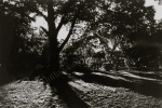 tree silhouette, light and shadow, black and white, film, film print by Lauryn Medeiros, photography